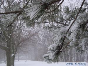 Snow Storm Feb 8, 2013
