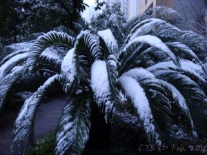 Have you ever seen snow on a palm tree before?
