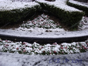 Wet Slushy Snow Covering the Flowers