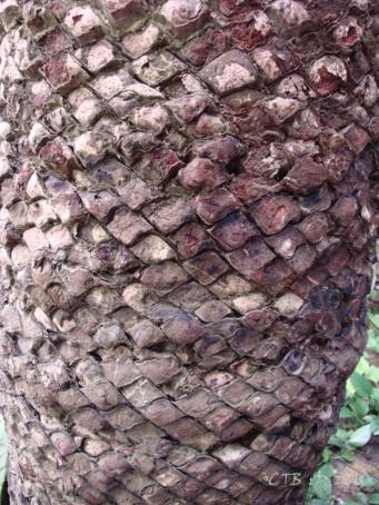 Tree Trunk -Botanical GArdens Shanghai