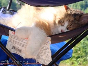Holly sleeping in a lawn chair Noelville Trailer Camp Ground.