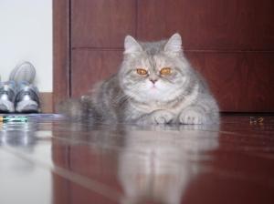 Willow, my furry companion