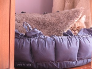 DO you feel like hibernating?