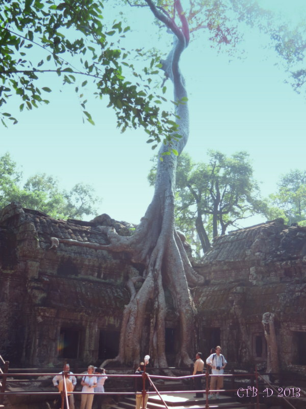 Just inside the main entrance our first glimpse of the incredible man vs nature in Ta Prohm
