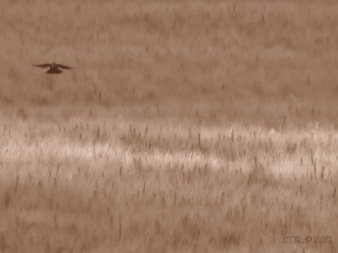 FAST moving bird and grasses