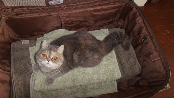 Willow in the Suitcase. Can I come too?