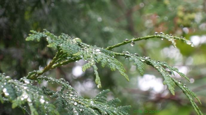 cool summer rain