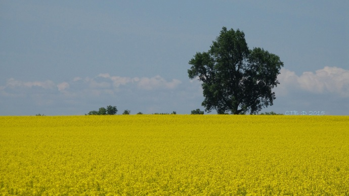 Half and Half -blue and yellow; sky and field