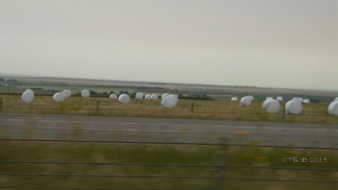 Field of Giant Marshmallows