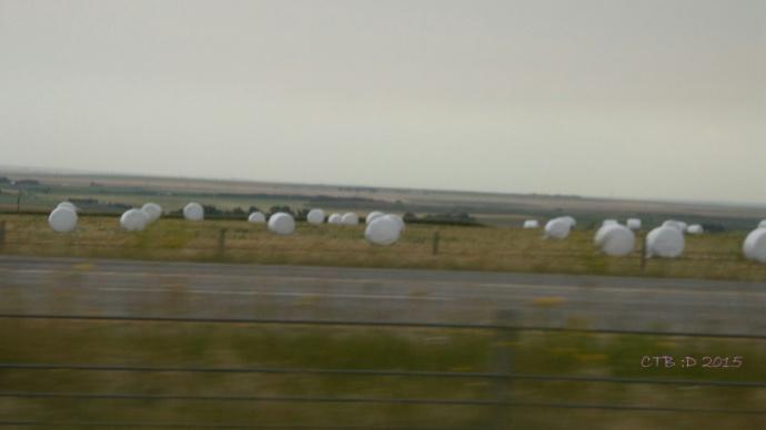 Field of Giant Marshmallows