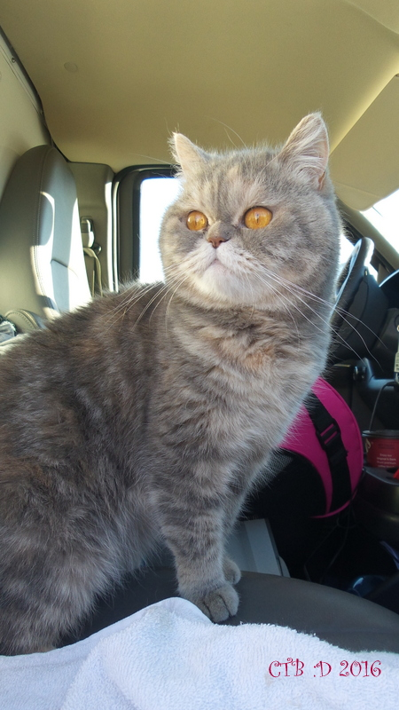 Willow the traveling cat